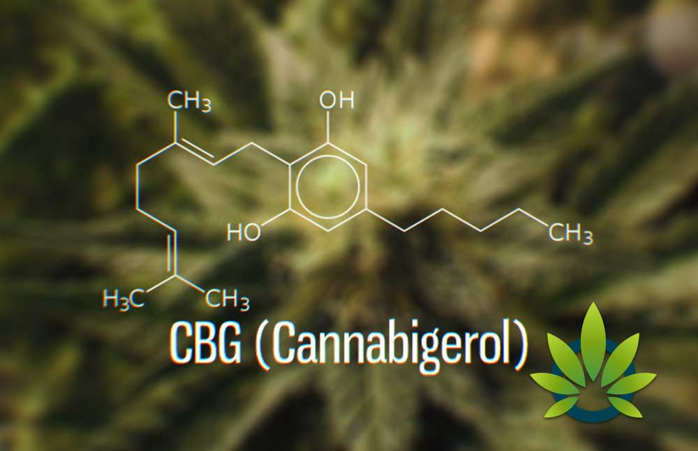 Cannabigerol (CBG): Complete User's Guide to CBG Cannabinoid and Its Health Benefits